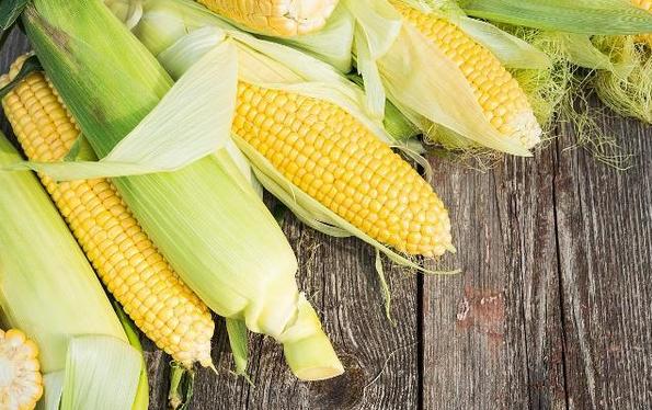 玉米的功效与作用,爱吃的人有福了!值得收藏